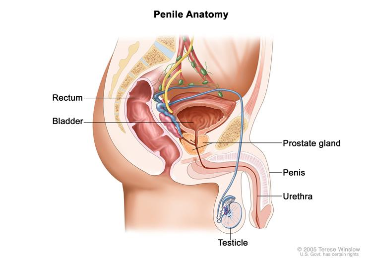 hpv and urethral cancer)